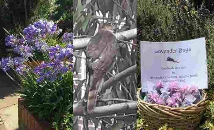 Garden-images